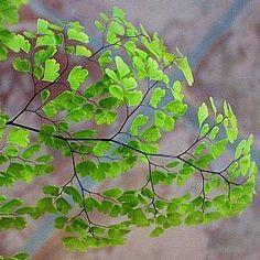 Plantas de interior_ Culandrillo-02