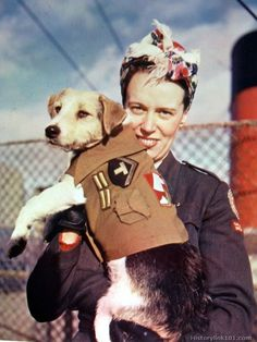 WWII Red Cross service dog... Always a HERO!