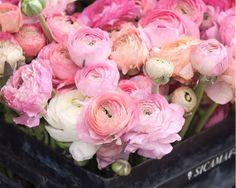 "Paris Photography, ""Pink Ranunculus,"" Spring Floral Wall Art, Botanical Paris Print, Pink Wall Decor on Etsy, $28.00"