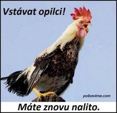 Good Morning, Funny Memes, Entertaining, Pictures, Petra, Photos, Alcohol, Marriage, Buen Dia