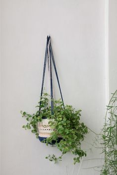 crochet for plant collection by Lotte Janssens from Belle Fleur de Lis