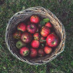 Jabukaaaaa. 🍎🍎🍎🍎🍎 Apple, Fruit, Instagram Posts, Food, Meal, The Fruit, Essen, Hoods, Meals
