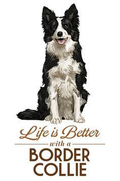 Border Collie - Life is Better - White Background (Art Prints, Wood & Metal Signs, Canvas, Tote Bag, Collie Puppies, Collie Dog, Border Collie Art, Drawn Art, Stock Art, Dog Art, Dog Love, Best Dogs, Dog Breeds