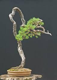 Janin bonsait: toukokuu 2012