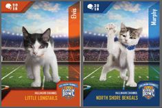 With puppies and kittens, who needs the Super Bowl?