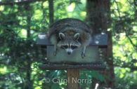 Carol Norris Photography #oneofakindshow