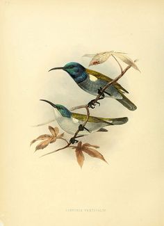n601_w1150 by BioDivLibrary, via Flickr