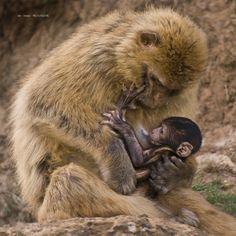 El amor de una madre by Jabi Artaraz on 500px
