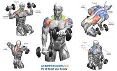 Shoulders And Back