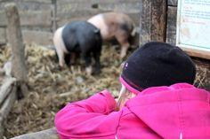 TOULCŮV DVŮR Kouzelné místo pro městské děti, kde si můžete prohlédnout domácí zvířátka, dozvědět se spoustu informací o chovu a hnízdění zvířat, a výlet zakončit dobrým jídlem v bio kvalitě!