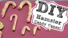 DIY HAMSTER CANDY CANES!