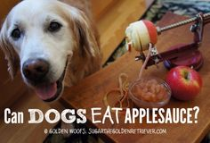 Apples are the quintessential Fall fruit. There are so many creative ways you can add apples to a dish. I love making applesauce and use it as an ingredient to make dog treats. On our previous post, w How To Make Applesauce, How To Make Pumpkin, Pumpkin Dog Treats, Homemade Dog Treats, Doggie Treats, Safe Fruits For Dogs, Dog Treat Recipes, Dog Food Recipes, Dog Safe Cake Recipe