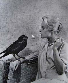 Tippi Hedren, Prado, Alfred Hitchcock The Birds, Philippe Halsman, Bird Canvas, Photo Vintage, Bird Poster, Colossal Art, Thing 1