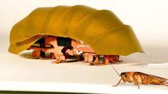 Un robot para encontrar personas enterradas. La capacidad del insecto para movilizarse en espacios reducidos facilitaría la búsqueda; el aparato cabe en la palma de una mano y puede desplegar sus patas cuando es aplastado