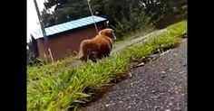 Homem se finge de morto para gravar a reação de seu cachorro
