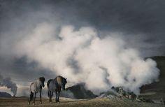 Les plus belles photos de chevaux by Tim Flach | Un Homme nommé Cheval