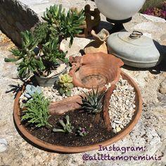 Yucca Gloriosa, Olive Garden, Soil Improvement, Fairy Furniture, Garden Route, California Poppy, Vegetable Garden Design, Meteor Garden 2018, Evening Primrose