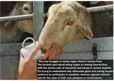 If we could look animals in the eye and realize their fear and pain for one's taste, I would wish them compassion. Animal Agriculture, Vegan Memes, Animal Graphic, Factory Farming, Why Vegan, Stop Animal Cruelty, Animal Rights, Vegan Life, Going Vegan