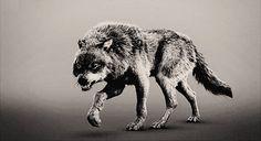 Wolf gif