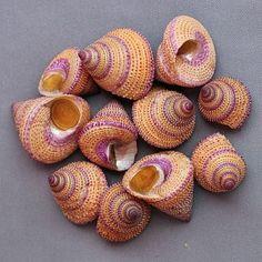 Seashell Purple Ring Top Shell Calliostoma Annulatum (we found these @ Main Beach PG) Seashell Identification, Purple Rings, Snail Shell, Animal Magic, Shell Art, Minerals And Gemstones, Shell Crafts, Sea Creatures, Sea Shells