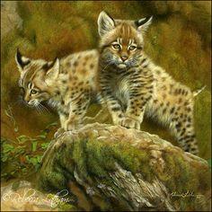 Bobcat Kittens by Rebecca Latham
