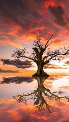 Artistic Photography, Amazing Photography, Landscape Photography, Nature Photography, Enchanted Tree, Dream Images, Fajardo, Nature Artists, Jolie Photo
