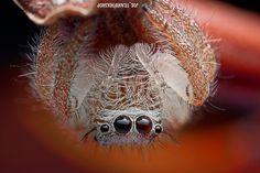Photo Je suis Spider man par Joe Teamworkshop sur 500px