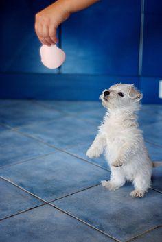 Sweet Baby | by peterkend