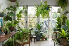 Jungle Vibes. Plants make you happier and healthier. It's in the science of Plant Life Balance. Words by Georgina Reid. Images by Daniel Shipp.