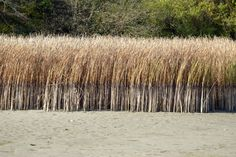 reed - nád Texture, Landscape, Architecture, City, Wood, Photos, Surface Finish, Arquitetura, Scenery