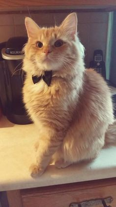 Burrito looks like a Bond villain with his bow tie http://ift.tt/2qEvDl8