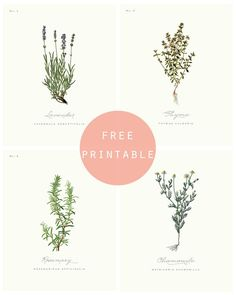 BOTANICAL PRINTS : Fresh