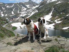 Grand Saint Bernard travel photo | Brodyaga.com image gallery: Switzerland, Valais