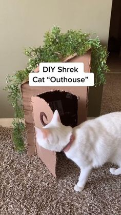 Cute Little Animals, Cute Funny Animals, Funny Cute, Cute Cats, Animal Jokes, Funny Animal Videos, Shrek Cat, Diy Cat Toys, Cat Room