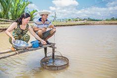 Shrimp farm Vietnam