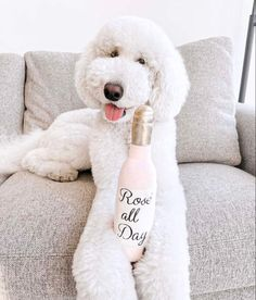 The Deluxe Pup | cute dog toys | champagne rosè dog toy Cute Dog Toys, Cute Dogs, New Product, Product Launch, Dog Accessories, Pup, Champagne, Dog, Home