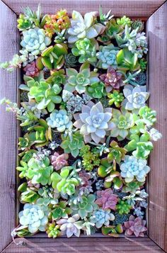 to Use Credit Card to Build Credit Vertical Gardens Are Perfect for Small Spaces Succulents, fabulous succulents!Vertical Gardens Are Perfect for Small Spaces Succulents, fabulous succulents!