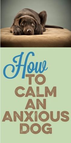 How To Calm An Anxious Dog #Dogs
