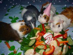 Guinea pig birthday!