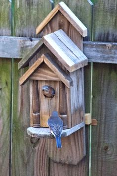 Eastern bluebirds Bird House Ideas http://socialaffiliate.wix.com/bird-houses http://buildbirdhouses.blogspot.ca/