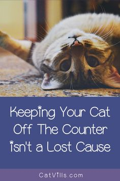 Keeping cats off the counter is something that many cat owners battle with daily. Don't worry, we can help! Here are four easy ways to make it happen! Baby Kittens, Cute Cats And Kittens, Outdoor Cats, Cat Behavior, Cat Health, Cool Pets, Animal Memes, Cat Life, Pet Care