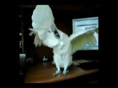 Heavy Metal Parrot