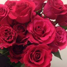 Hot Lady roses - open beautifully!