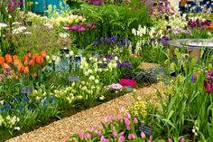 Avon Bulbs of Somerset feature a superb and vibrant array of bulbous plants including a wide range of tulips. Rhs Flower Show, Chelsea Flower Show, Beautiful Flowers Garden, Beautiful Gardens, Soft Caress Mahonia, Bulbous Plants, Garden Ornaments, Show Photos, Weird And Wonderful