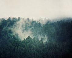 Oregon Landscape Photography Evergreen by EyePoetryPhotography (Art & Collectibles, Photography, Color, Landscape, Nature, Oregon, Large Wall Art, Art Print, Fine Art Photography, Teal Wall Decor, Oregon Forest, Nature Photography, Trees, Nature Print, Spring Fog, Evergreen Trees)