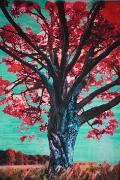 The red tree,8x10 Fine Art photograph with painting and drawing, Fall tree, art, teal red art, nature on Etsy, $49.00