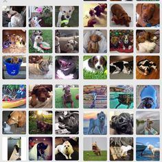 Vero's Best Dog Photo Contest Submissions 2015