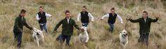 www.portraitsbygregg.com Portrait, Dogs, Animals, Beautiful, Color, Animales, Headshot Photography, Animaux, Pet Dogs
