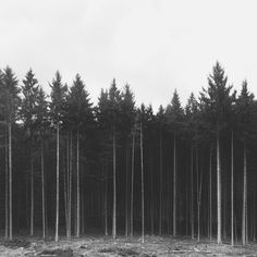 Simply and striking black and white nature photography