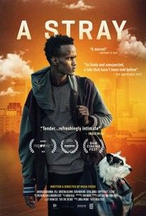 A Stray(2016) - Rotten Tomatoes